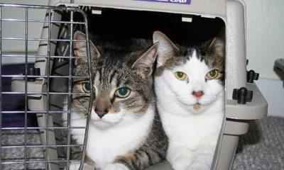 Kauf einer Katzentransportbox