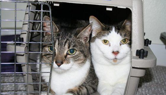 Katzen in Katzenbox