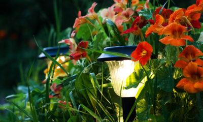 Die LED-Beleuchtung kann in jedem Garten den Unterschied machen